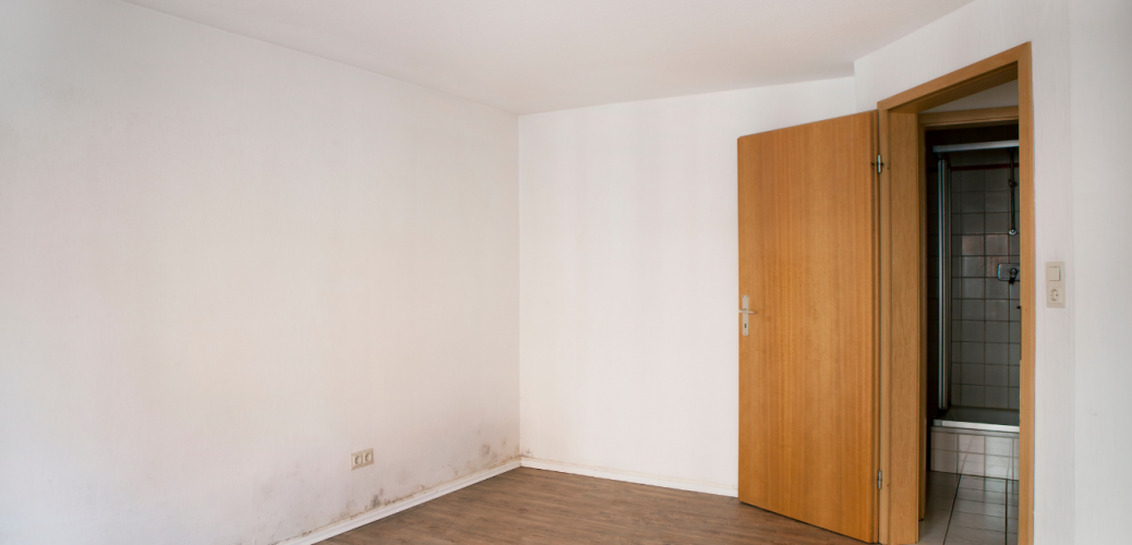 Mould in the House: Condensation and Mould Advice for Tenants